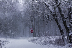 Red in snow (Petr Sýkora) Tags: les sníh zima winter snow trees forest stop nature