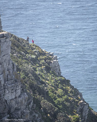 From Table Mountain (Hernan Linetzky Mc-Manus) Tags: capetown southafrica wild linetzky ciudaddelcabo