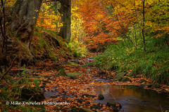 Autumn colours Langley Burn-1 (mikeknowles60) Tags: autumn aonb autumnfoliage beautifullight beautifullandscape beck stream northpennines northumberland river rocks ripples reflection langleyburn