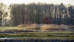 _IMG4435 (Hendricus M. de Regt) Tags: the netherlands gelderland natuur nature landscape grass bos forest trees zonsopkomst sunset swamp nederland veluwe landschap gras water bomen moeras