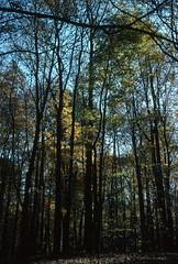 Eagle Creek Park, Indianapolis, Indiana (Roger Gerbig) Tags: fullframe 135film 35mm transparency slidefilm pkr kodachrome64 ef28105mmf3545 canoneos3 rogergerbig autumn fallcolors indiana indianapolis eaglecreekpark