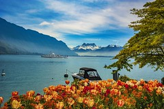 Smoke on the water. Spring time in Montreux. Canton of Vaud , Switzerland. izakigur no. 5445. (Izakigur) Tags: vaud montreux spring switzerlnad suisseromande smokeonthewater flowers tulips ch helvetia lasuisse musictomyeyes nikkor nikon suiza suisse suisia schweiz romandie suizo swiss svizzera سويسرا laventuresuisse lepetitprince luz lumière light licht ضوء אור प्रकाश ライト lux światło свет ışık switzerland liberty izakigur flickr feel europe europa dieschweiz myswitzerland schwyz suïssa nikkor2470f28 thelittleprince ilpiccoloprincipe laprimavera