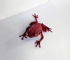 Tree frog (orig4mi.) Tags: treeforg frog origami paperfolding