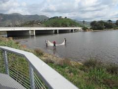 Malibu Lagoon, CA (Hart Walter) Tags: malibulagoon legacypark royaltern brownpelican grayplover marbledgodwin