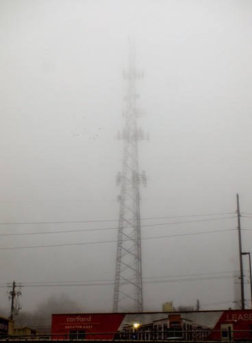 Murmuration, morning mist, and monolith