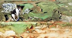 alter Lack, alter Hund (erix!) Tags: dog hund collage lack abgeplatzt