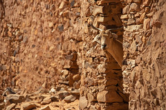 Who are you? (s_andreja) Tags: mauritania chinguetti goat stone wall look