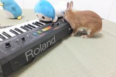 Ichigo san 1510 (Errai 21) Tags: いちごさんとキキとキーボード ichigo san  キキ keyboard ichigo rabbit bunny cute netherlanddwarf pet ウサギ うさぎ いちご ネザーランドドワーフ ペット 小動物  ichigo 1510