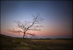 the bird of the sunset (biancavanderwerf) Tags: landscape sunset bird tree solo solotree dutch sand dunes night bianca