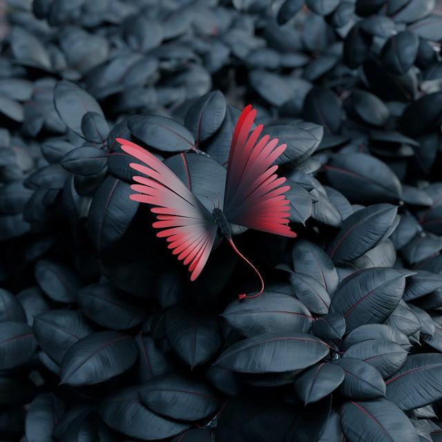 Обои бабочка, листья, крылья, контраст картинки на рабочий стол, фото скачать бесплатно