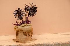 Bejeque negro (inma F) Tags: roja berode negro minimalismo planta canarias bejeque carnosa aeonium macaronesia suculenta