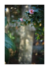 2019/2/10 - 12/15 photo by shin ikegami. - SONY ILCE‑7M2 / Voigtlander NOKTON CLASSIC 40mm f1.4 SC VM (shin ikegami) Tags: asia sony ilce7m2 sonyilce7m2 s7ii 40mm voigtlander nokton nokton40mmf14sc tokyo photo photographer 単焦点 iso800 ndfilter light shadow 自然 nature 玉ボケ bokeh depthoffield naturephotography art photography japan earth