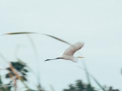 P1022628 (Claussm) Tags: jupiter 21m 200mm soviet russian lens vsco az arizona bird crane sky telephoto