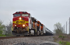 As Real as Fake Gets (Jacob Narup) Tags: train trains railfan railroad railfanning texas bnsf bnsfrailway bnsf763 bnsfwarbonnet bnsffakebonnet fakebonnet warbonnet rosenberg rosenbergtexas rosenbergtx