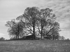 deer shelter skyspace (Johnson Cameraface) Tags: 2019 march spring olympus omde1 em1 micro43 mzuiko 1240mm f28 johnsoncameraface yorkshiresculpturepark ysp hollowhills deershelterskyspace monochrome blackandwhite tree