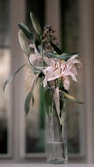 Fading flowers in the perfume museum (Sunrise 60) Tags: havana cuba