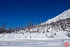 Roadtrip 24 (Kasia Sokulska (KasiaBasic)) Tags: canada alberta winter rockies travel mountains nature jasper np landscape