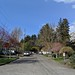 Residential street in Seattle - spring