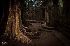 Cambogia - Ta Phnom Architettura e Natura una sola cosa. (iw2ijz) Tags: nikon d500 patrimonio umanità unesco chiaroscuro landscape fotografia trip taprohm viaggio cambogia khmer rovine ruins architettura alberi radici cambodia
