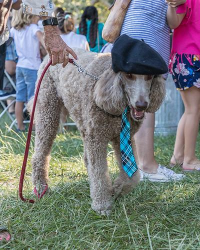 Canine Cavalcade participant