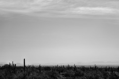 Negativity. (Snap.off) Tags: details perspective monochromatic monochrome whiteblack blackwhite blackandwhite bw bnw sonyalpha sonyemount sonya7r2 sonya7rii carlzeiss zeiss batis1885 batis8518 batis85mm batis explore western arizona phoenix negativespace hiking hike mountains naturephotography naturelover naturelovers naturephotographer nature fantasticnature landscapephotography landscapejunkies landscapes landscape