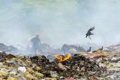 Registrando outras realidades em Castro Alves/Ba. ⠀ ⠀ Registering other realities in Castro Alves / Ba. ⠀ ⠀ #zerandobahia #baianidadenago  #suafoto #tododiaedefoto #CastroAlves #bahia #ba #brasil #brazil #br #Sony #SonyA6000 #fotografia #lixo #lixao #dump (Eber Paz) Tags: brazil pessoa lixo fotosbahia brasil igersbahia zerandobahia br ave natgeobrasil igersbrasil bird suafoto rubbish tododiaedefoto sony baianidadenago dumpingground lixao people urubu fotografia trash bahia sonya6000 fotojornalismo castroalves nationalgeographictravel photography baeberpazeberpazfotobabahiabrasilbrasilemimagensbrazilcastroalvesebereberpazeberpazpessoasonysonya6000avesbirdbrasilemimagensdumpinggroundeberpazfotoeberpazfotofogofotojornalistafotojornalistafumaçalixolixãopeoplerub