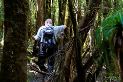 20190113-09-Hiking up Mt Wedge (Roger T Wong) Tags: 2019 australia mtwedge rogertwong sel24105g sony24105 sonya7iii sonyalpha7iii sonyfe24105mmf4goss sonyilce7m3 tasmania bushwalk forest hike outdoors southwest tramp trek walk