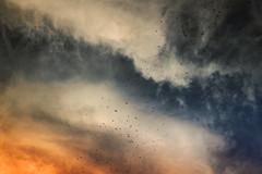 Birds And Clouds (Modkuse) Tags: clouds sky birds nature natural skyscape art artphotography artistic photoart fineartphotography fineart fujifilm fujifilmxt2 xt2 xf1855mmf284rlmois fujinon fujinonxf1855mmf284rlmois