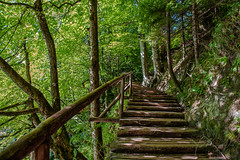 Steps-into-nature.jpg (yobelprize) Tags: jungle plitvicelakesnationalpark natural foliage bridge woods yobelmuchang plant tree trail outdoors environment wood path landscape woodensteps incline nationalpark outdoor croatia forest hikingtrail yobel leaf green rain adventure steps beautiful travel hiking summer nature park plitvice lush tropical mountain