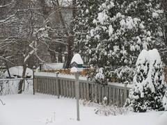 ** La tempête des 12 et 13 février 2019 ** - 4/6 (Impatience_1(retour progressif)) Tags: tempêtedeneige snowstorm m impatience cour yard arbre tree neige snow cabanedoiseaux nichoir birdnest 12et13février2019 february12and132019 supershot coth coth5 sunrays5 abigfave