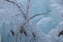 2019_094 (KusodebuJAPAN) Tags: japan saitama asigakubo chichibu icicle illumination 埼玉 秩父 芦ヶ久保 あしがくぼの氷柱 氷柱 イルミネーション