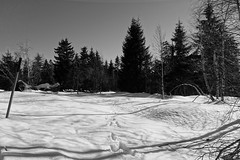 the snow is thawing (1) (mgheiss) Tags: tauwetter tauen schnee snow sonyrx100iii schwarzwald blackforest winter februar february