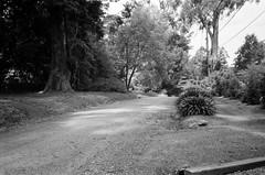 Hume Lane! (Matthew Paul Argall) Tags: canonsnappy20 fixedfocus 35mmfilm blackandwhite blackandwhitefilm kentmere100 100isofilm road street humelane