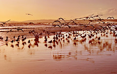 Bailado (Zéza Lemos) Tags: mar gaivotas algarve água areia asas aves ave portugal praia pordesol puestadelsol ondas oceano vilamoura