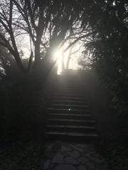 20190317_WalkDonaupark_014 (Tauralbus) Tags: wien vienna donaustadt donaupark park treppe stufe sonnenaufgang sonne lichtspiele stairs