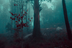Memories of dreams (elsableda) Tags: sintra portugal twilight night fog winter mist misty foggy dawn dusk rain tree nature