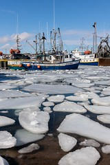 Harbour Ice (Karen_Chappell) Tags: harbour ice nfld newfoundland canada atlanticcanada atlantic ocean sea boat boats white blue stjohns fishing fishingboat water winter avalonpeninsula eastcoast buoyant