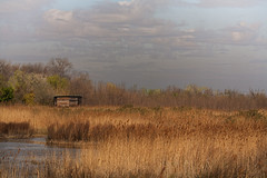 The hut (JLM62380) Tags: camargue france hut cabanon light swamp clouds sky lagune herb ciel nuages lumiére nature saintesmariesdelamer cabane eau water marais