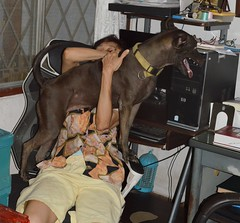 lightning! (the foreign photographer - ฝรั่งถ่) Tags: hersey wife chair lightning room our house bangkhen bangkok thailand nikon d3200