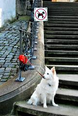 ironic (Anselmo Portes) Tags: ceskykrumlov czechrepublic repúblicatcheca dog ironic stairs cachorro irônico escadas