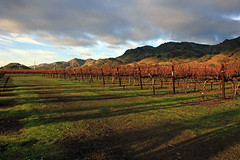 Long Shadows (JB by the Sea) Tags: napavalley napa winecountry california december2018 winery vineyard chimneyrock chimneyrockwinery