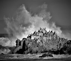 January4Image0027 (Michael T. Morales) Tags: wave rockformation pelicans birds ocean mar sea montereybay pacificgrove wavesplash