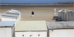 Sur le plage de Zeebruges, Belgium (claude lina) Tags: claudelina belgium belgique belgië zeebruges mer sea merdunord noordzee bruges plage sable cabine