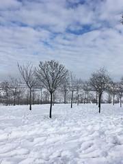 "Trees on the snow field (""NurSat"") Tags: field snow blue sky trees snowfield clouds cloud cloudy blanketofsnow earthandsky earth"