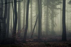 In the Woods of the Eifel (Netsrak) Tags: baum bäume eu eifel europa europe forst landschaft natur nebel rheinland rhineland wald fog forest landscape mist nature outdoor trees winter woods