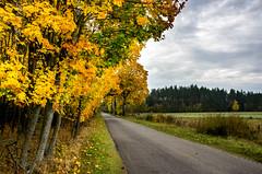Mazury droga na Miętkie (slaant21) Tags: autumn droga maz yellow jesień żółty colors road kolory krajobraz mazury landscape gminadźwierzuty warmińskomazurskie poland pl