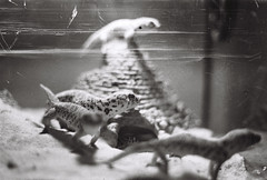 Lizards -1 (LexylexyXiao) Tags: fineart photography flim memory