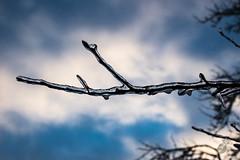 Aloha365 - Day 279 - January 21, 2019 - Frozen branch (alohadave) Tags: 365project aloha365 massachusetts norfolkcounty northamerica overcast pentaxk3 places quincy season sigma1750mmf28exdchsm sky southquincy unitedstates winter
