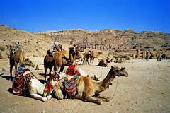 Dromadaires (Raymonde Contensous) Tags: pétra jordanie montagne siteantique roche grès pierre dromadaires animaux paysage nature