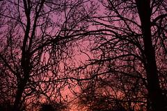 DSC_5899 (griecocathy) Tags: paysage lever soleil arbre branches violet noir rosée